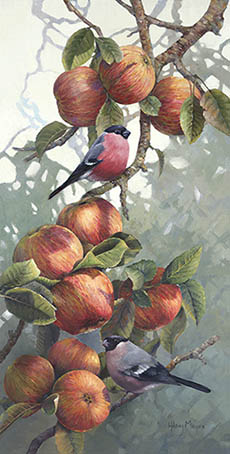 Orchard Bullfinches