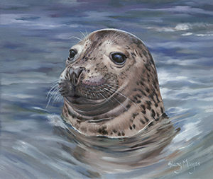 St Ives bay Seal