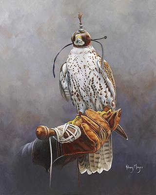 Falconer's Saker Falcon