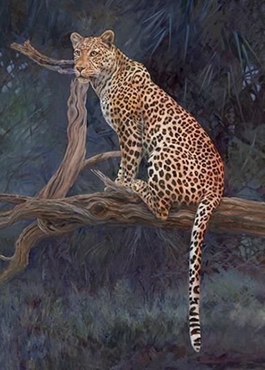 Leopard from Botswana